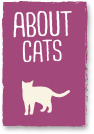 Pet Wellness - About Cats